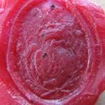 neuzeitliches Petschaft mit Initialen im gekrönten Wappen